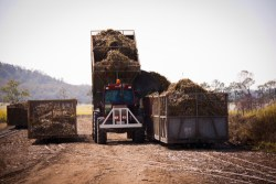 Tractor loading cane bins